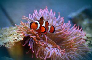 tafel aquarium
