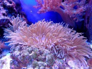aquarium hout