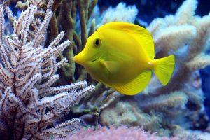 verlichting aquarium