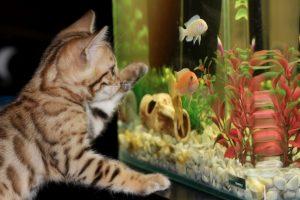 decoratie aquarium