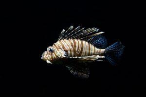 meubel aquarium