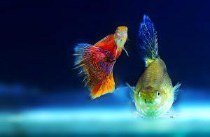 lamp aquarium