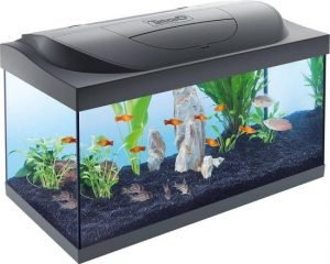 bak aquarium